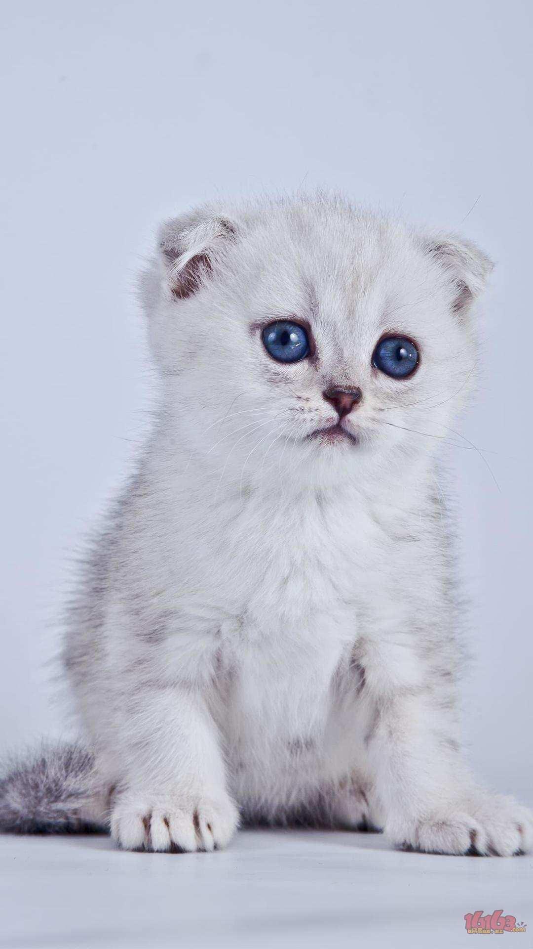 可爱小猫猫 {{nickname:爱食你}}