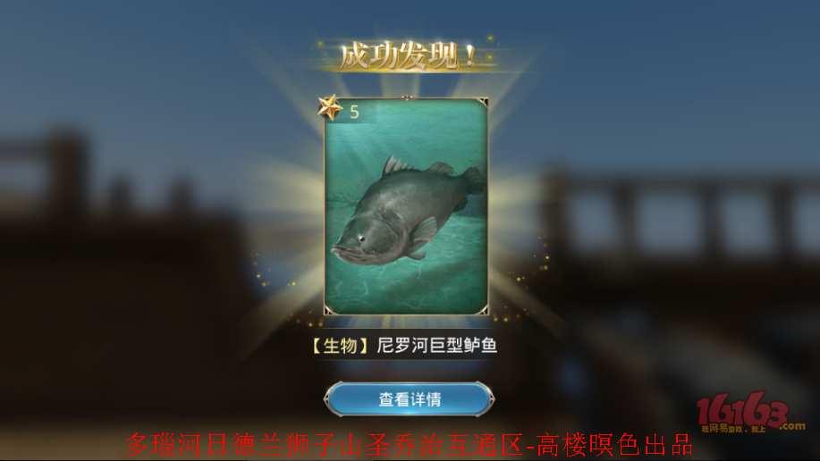 2、尼罗河巨型鲈鱼2.jpg