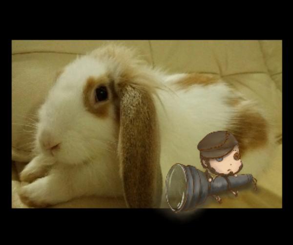 主题:兔与求生者昵称:丷神奇的群主丷