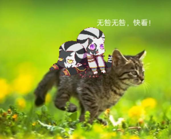 主题:我和无咎乘着猫昵称:OHenry
