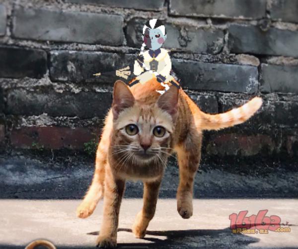 试图骑猫——JANOvOL.jpg