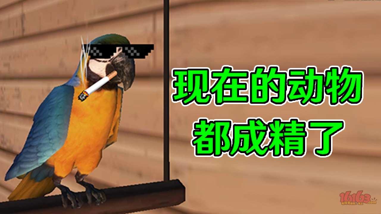 《明日之后》娱乐短视频71:这鹦鹉成精了吧!阿强被秀一脸!.jpg