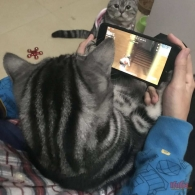 一只猫的梦想