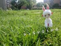 我和我们家山兔的爱恨情仇开始了